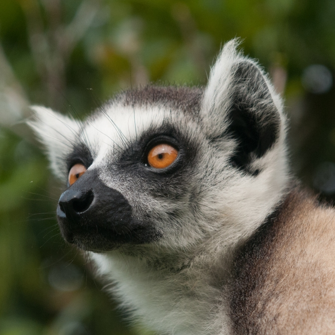 Highlights of Madagascar South & West – 14 days